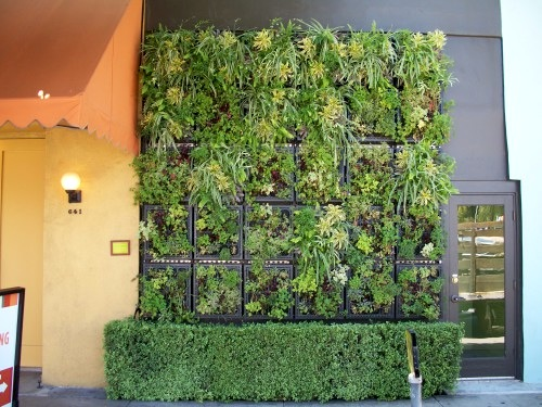 Pizzeria-mozza-edible-living-wall2