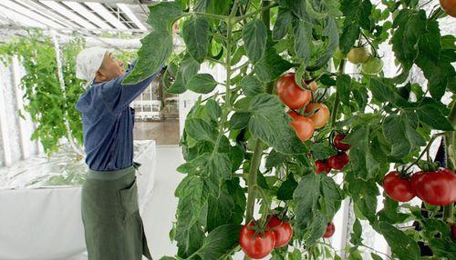 Urban-farming-japan
