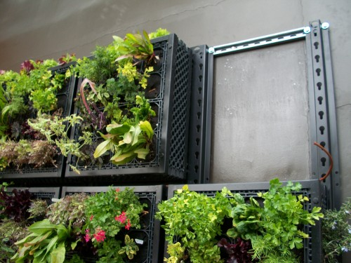 Pizzeria-mozza-edible-living-wall-installation
