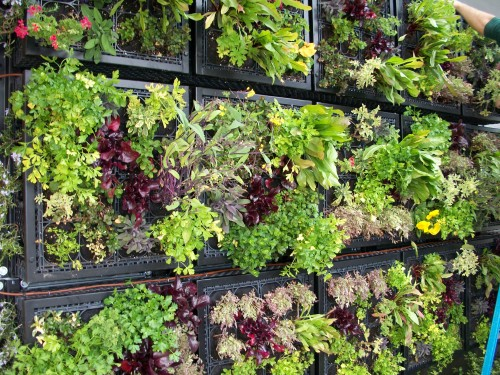 Pizzeria-mozza-edible-living-wall-install