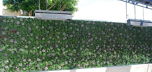 True-food-newport-beach-green-wall