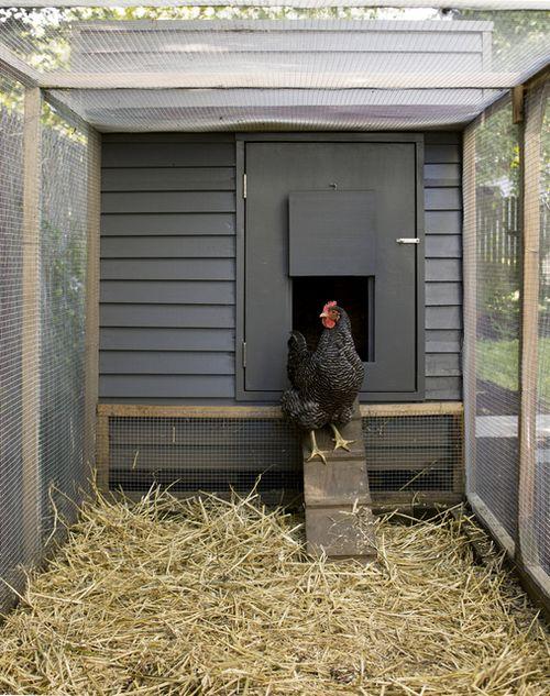Portland-chicken-coop-gray2