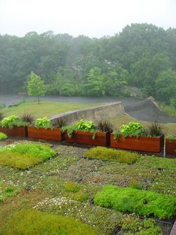 Green roof (and veggies) with the dam and the millpond in the background, photo by Mark Simon