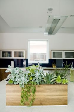 Breezeway House Utah plants